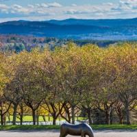 """Honor,"" a life-size bronze sculpture by Braintree artist Karen Petersen, at The Vermont Veterans Memorial Cemetery in Randolph Center."
